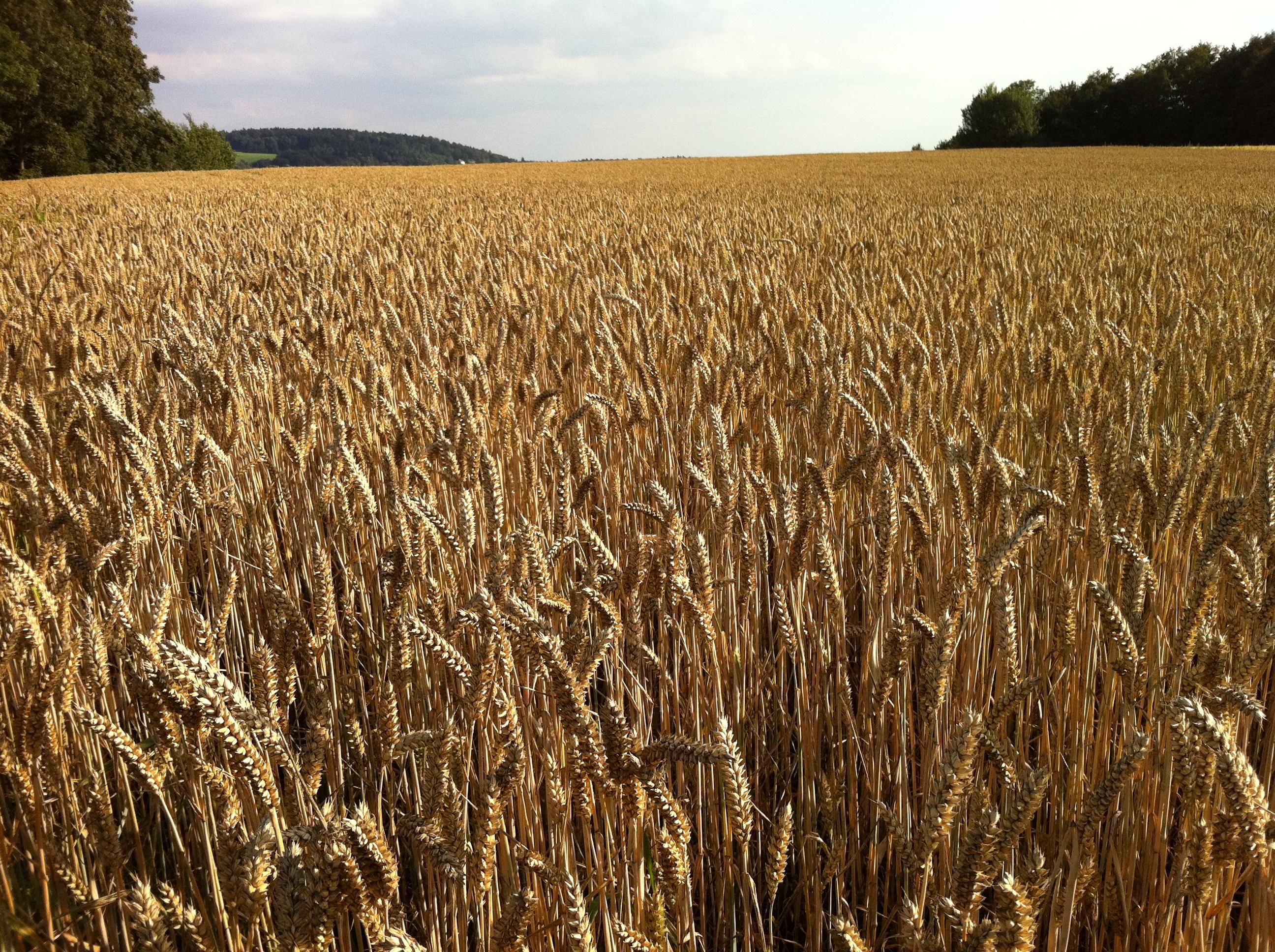 Az agrárminiszter pályázati felhívása a génmegőrzési feladatok ellátására