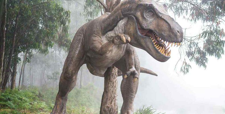Kékbálnaméretű dinoszauruszfajokat fedeztek fel Kínában